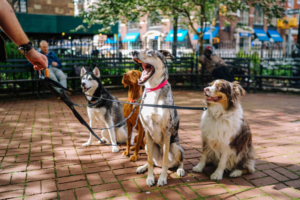 Pets And Their Owners Benefits By Having Dog Stroller Bvigazette